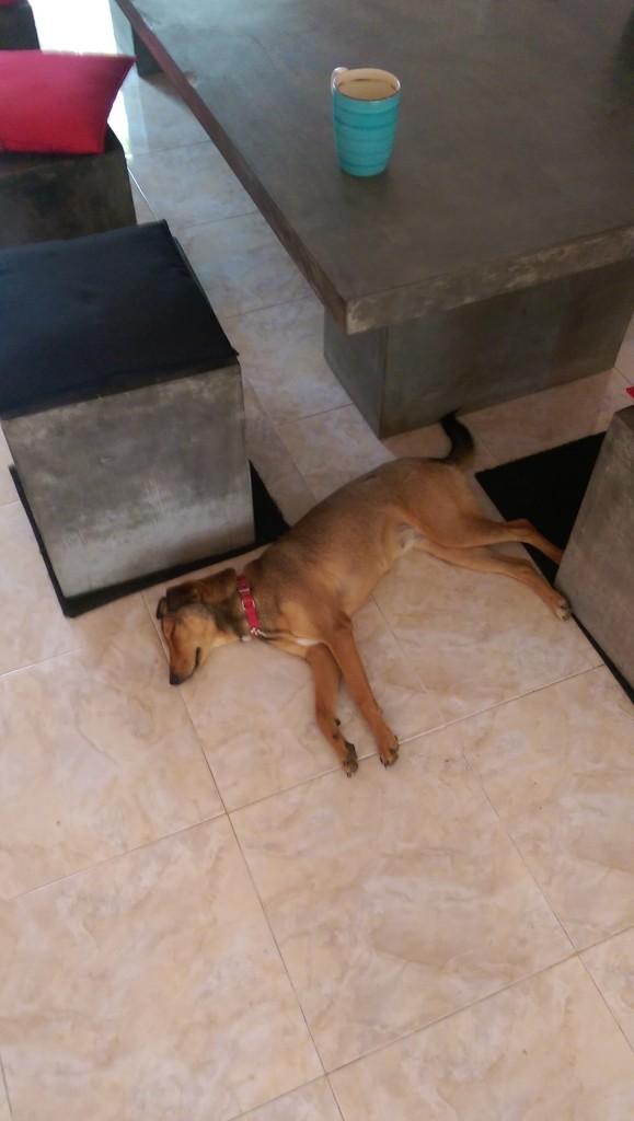Hostel Dog in Kandy, Sri Lanka
